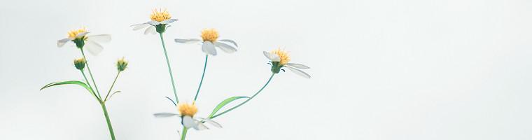 Kamille als Hausmittel gegen Erkältung und Grippe
