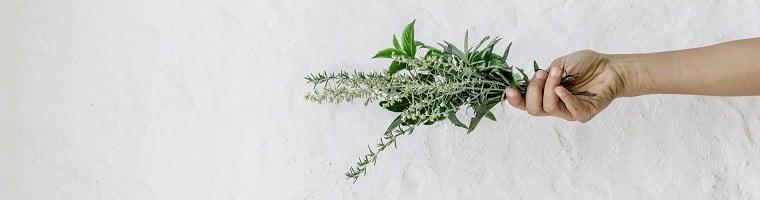 Verschiedene Heilpflanzen können als Hausmittel gegen Zahnschmerzen verwendet werden.