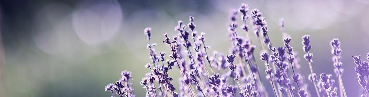 Lavendelöl als Hausmittel gegen Sonnenbrand